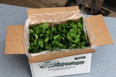 Lakeville Produce - Open Box